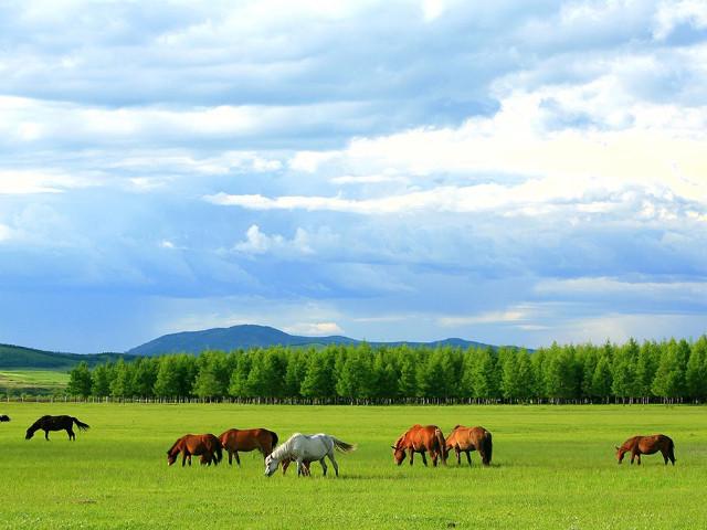 七月去呼伦贝尔南线和北线怎么选?哪条线路景色美?