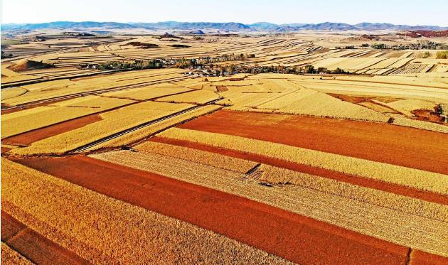 扎兰屯是怎么推进现代农业产业体系建设的呢
