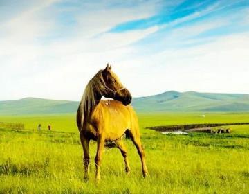 呼伦贝尔大草原最佳旅游季节是什么时候?