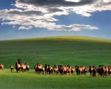 呼伦贝尔大草原几月份最美?有哪些特色景观?