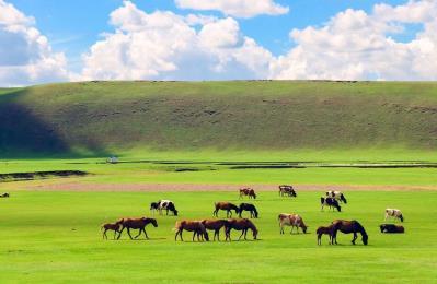 2020蒙古精神呼伦贝尔旅游三日游路线