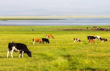 2020蒙古王呼伦贝尔根河旅游精拼五日游路线