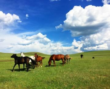 2020呼伦贝尔草原-湿地-满洲里-恩和三日游