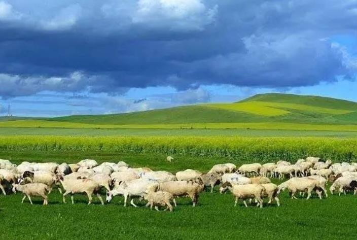 呼伦贝尔的羊肉
