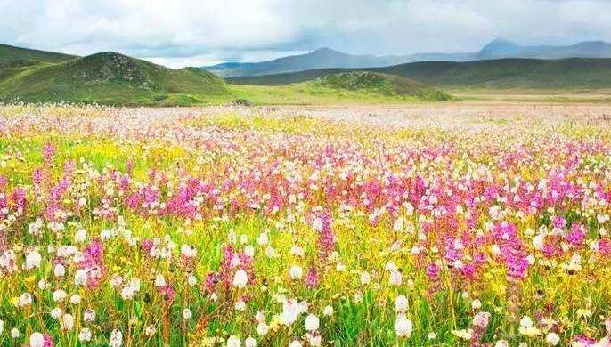 什么时候去呼伦贝尔大草原旅游最好呢?