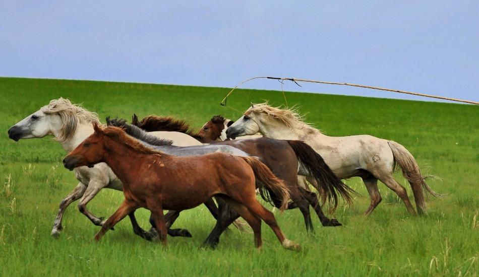 呼伦贝尔草原骑马