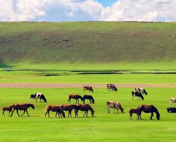 呼伦贝尔大草原哪里最好看