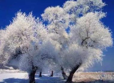冬季去呼伦贝尔旅游有什么好玩的?