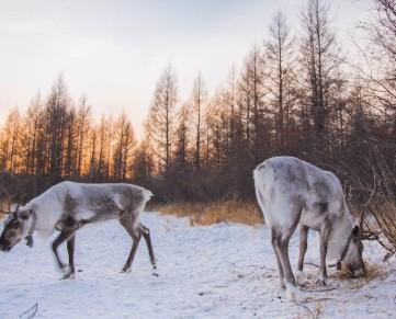 呼伦贝尔极寒之旅 呼伦贝尔冬季游记