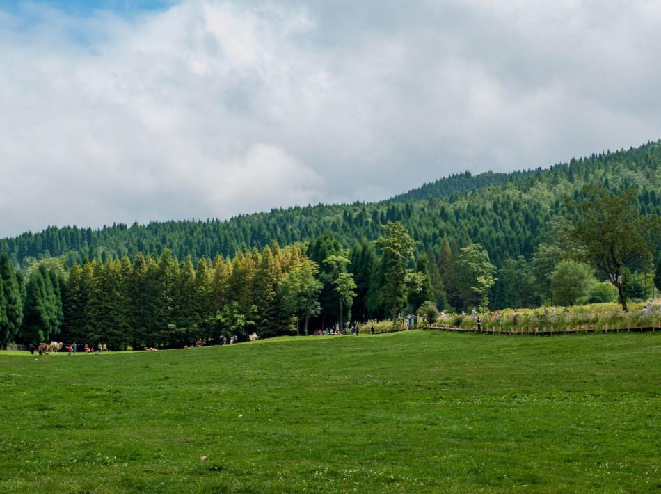 呼伦贝尔市莫尔道嘎国家森林公园