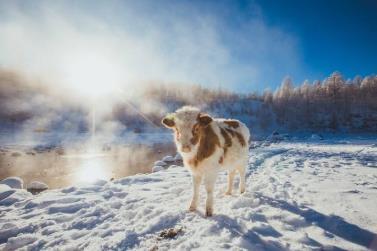 冬季呼伦贝尔旅游去哪玩?