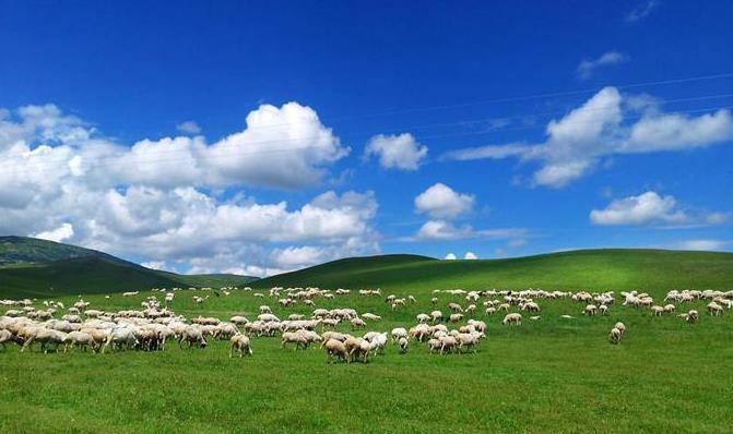 呼伦贝尔草原的羊肉好吃吗?