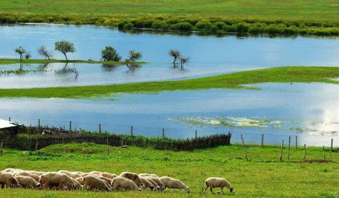 呼伦贝尔草原的羊肉?