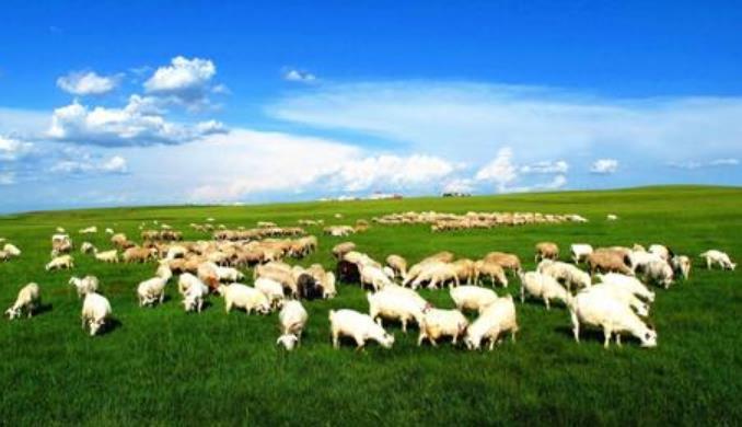 呼伦贝尔草原的羊肉