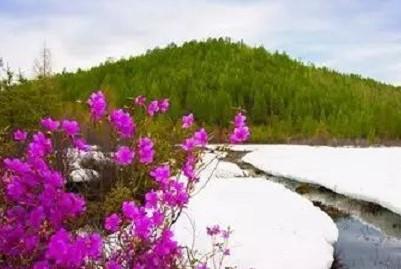 大兴安岭一年四季的景色可真美